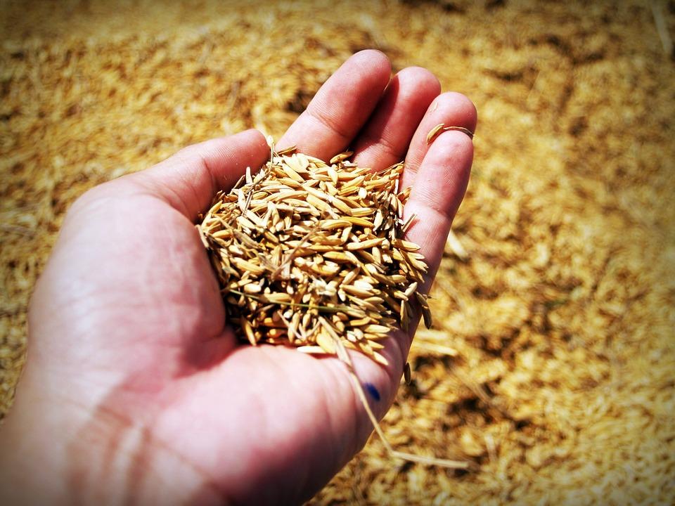 Все что надо знать о рисе