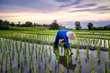 Что нам стоит знать о рисе