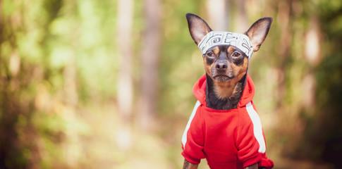 Что делать при нападении уличных собак