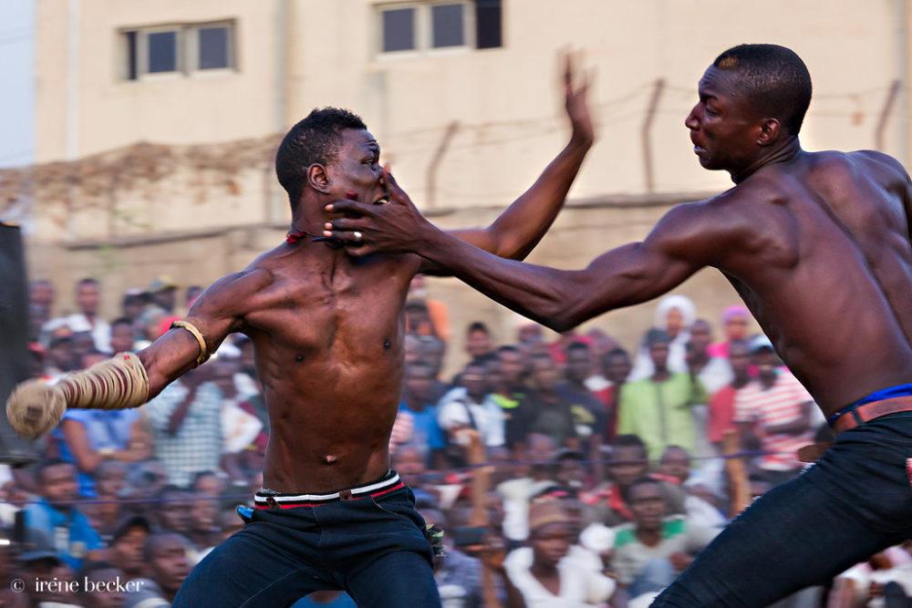 Полудикий африканский бокс Дамбе