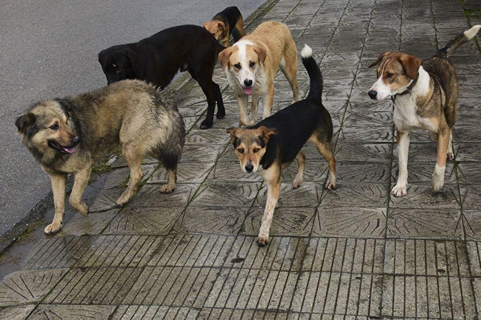 Почему уличные собаки бросаются на людей, что делать в данный момент