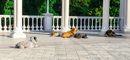 Как поступить, если нападает свора собак